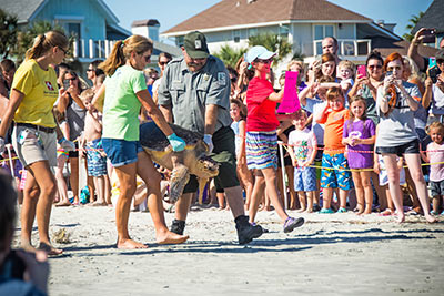 Marsh the sea turtle is released after being cared for at the Sea Turtle Center.